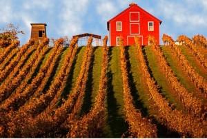 Nicholas - Fall Walk Around Wine Tasting