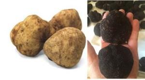 Truffles, Black & White
