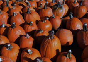 Gladstone Tavern - Pumpkin Week