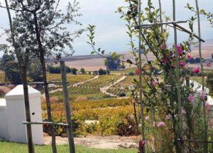 A.A. Badenhorst Family Wines - Exterior