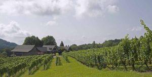 Linden Vineyards - Hardscrabble Vineyard