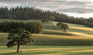 Stoller Winery - View from Tasting Room